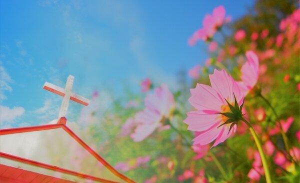十字架とコスモス