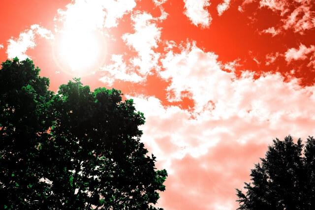 薄暗い空と木々