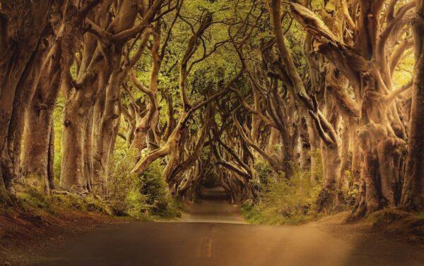 木々が生えどこまでも続く一本道
