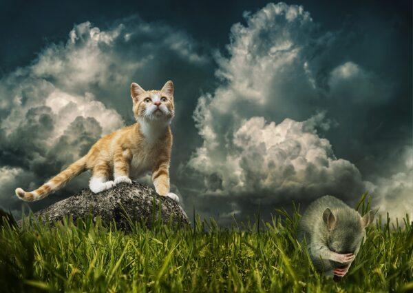 猫とネズミと草原と