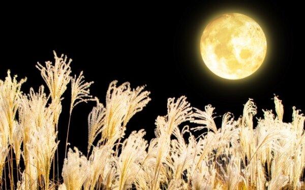 月光とススキ